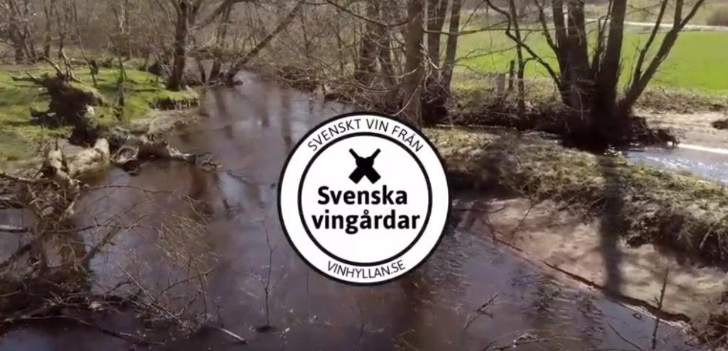 Hur går degorgering av ett mousserande vin till? Bengt Åkesson på Skepparps Vingård berättar.
