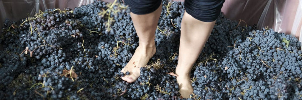 Hur smakar fottrampat vin?