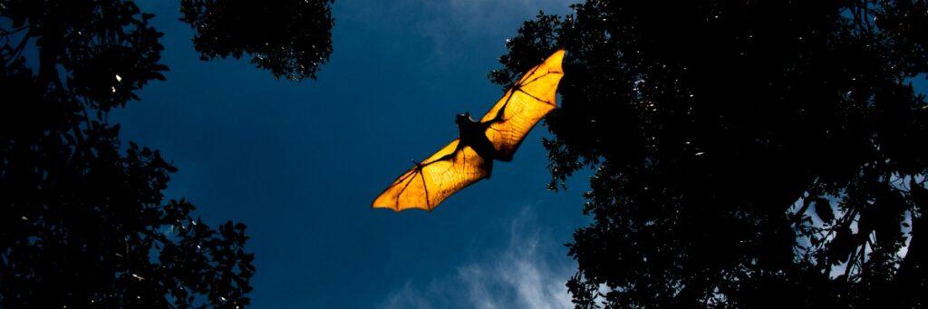 Batman – hjälte i vingården mot malproblem